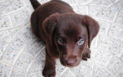 Forsikring af hund