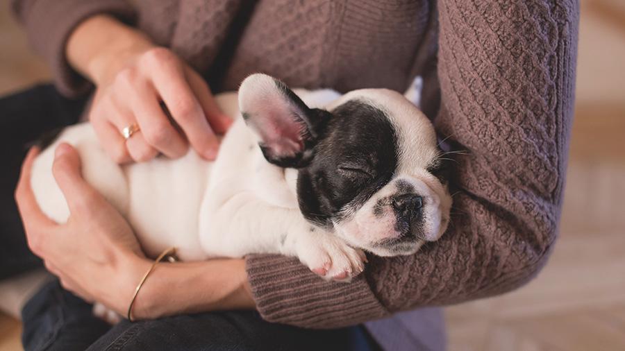 Diarré hos hund